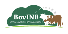 BoVine - Beef Innovation Network Europe